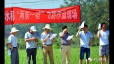 """韦加无人机在城固县开展""""两防一喷""""飞防作业服务,助力脱贫攻坚水稻产业帮扶"""