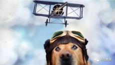 我们儿时都有当飞行员的梦想